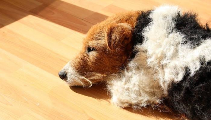 Comfortabilidad del suelo radiante.
